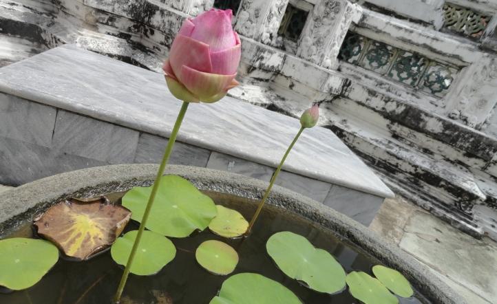 Lotus Bud (Phra Borom Maha Ratcha Wang, Bankok, Thailand)